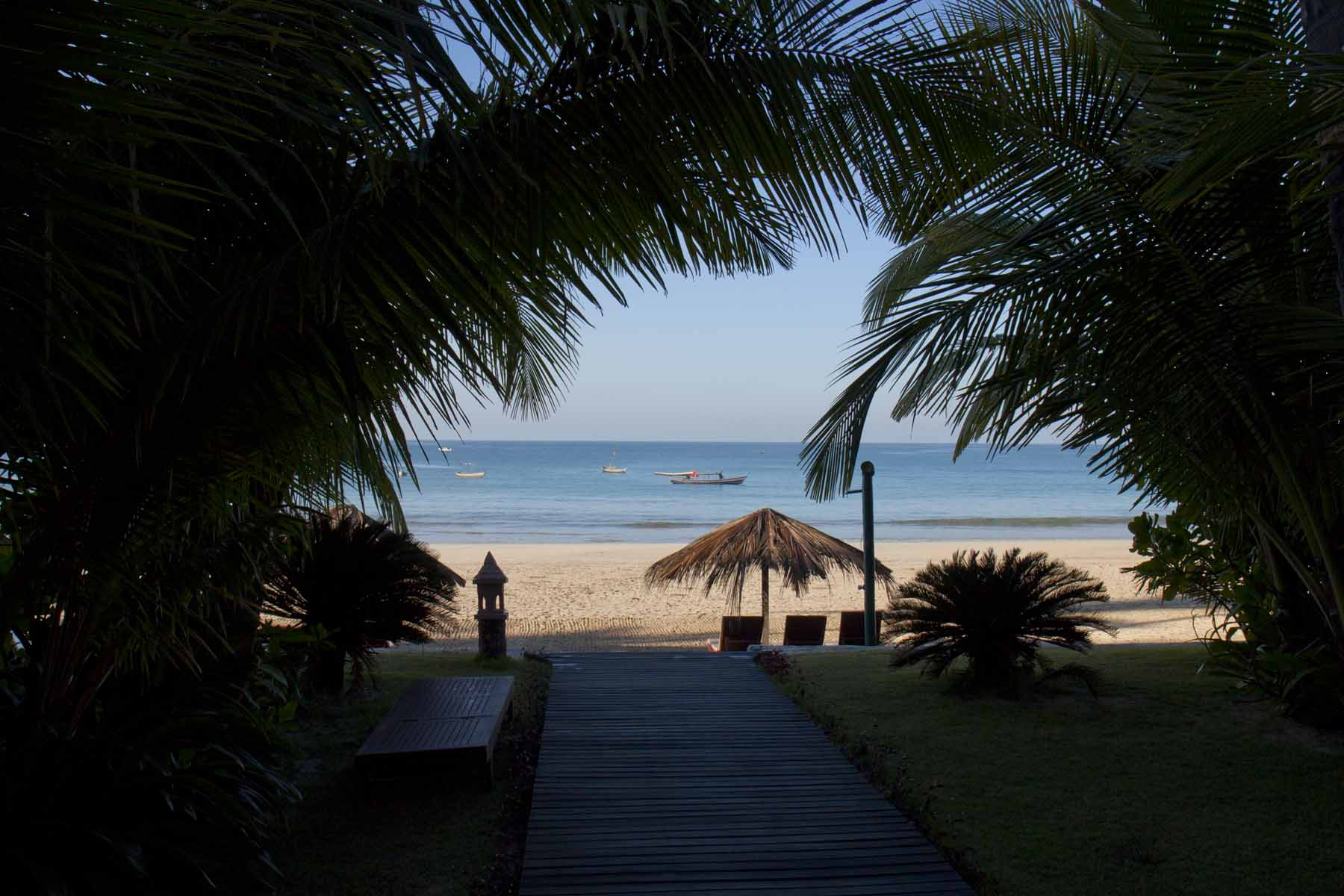 Through the palm fronds to our beach and lounges